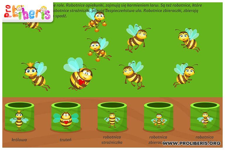 pszczola_4