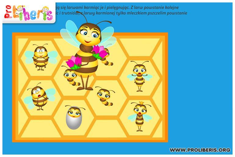 pszczola_8